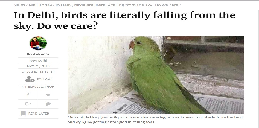 birds are falling from the sky, come join ndns and rescue birds and animals