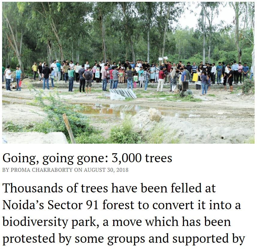 Tree Felling in noida sector 91 forest by authorities. Join NDNS save trees