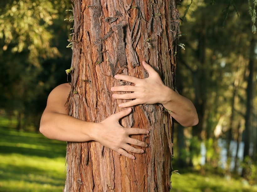 Curing Tree Blindness