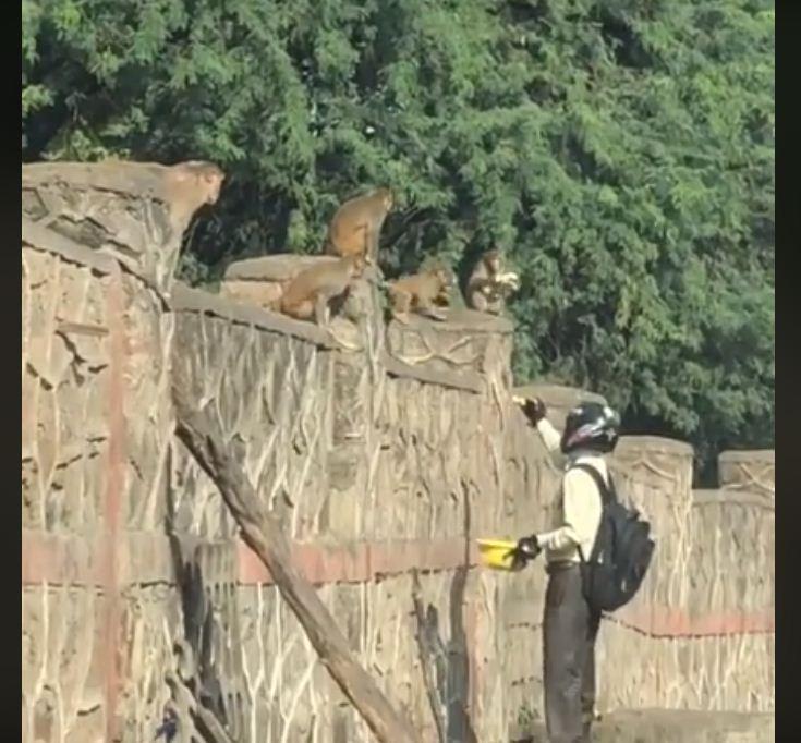 Capture monkey